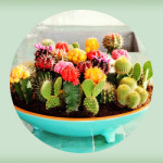 display_ideas_for_succulents